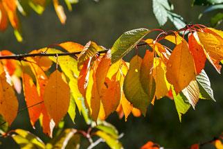 Farben der Blätter im Herbst