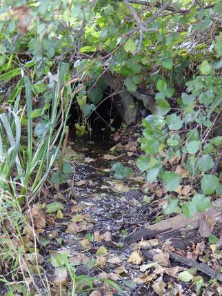 Blick auf den Scheidgraben, Foto NABU GG