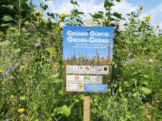 Projekt Grüner Gürtel Groß-Gerau