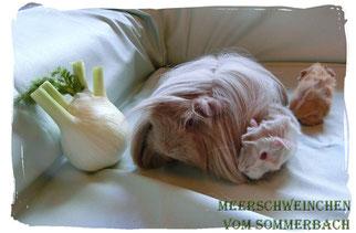 Chila vom Sommerbach mit ihrem ersten Wurf