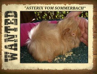 Asterix vom Sommerbach