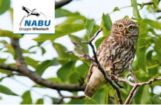 NABU Wiesloch Newsletter