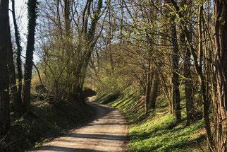 Baiertal, Weg zum Nußlocher Steinbruch, Foto: Chr. Aly