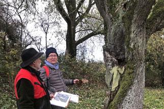 Erfassung des Baumbestands im Projektgebiet, Foto: NABU Wiesloch