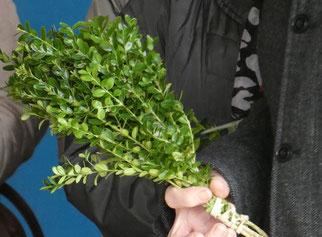 Bouquet de buis à Pleyber
