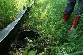 Amphibienschutz Amphibienschutzzaun Amphibienschutzzäune NABU Düren