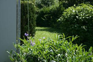Heckenschnitt und Baumfällungen NABU Düren