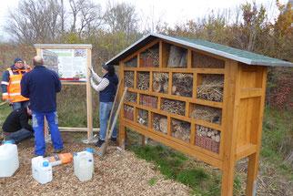 Wildblumeneinsaat Insekten Artenschutz Infotafeln Insektenhotel Ellen NABU Düren