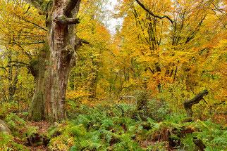 Wald Waldbaden NABU Düren