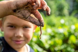 Sensibilisation à la vie du sol