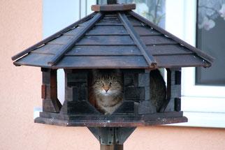 Vögel dürfen am Futterhäuschen nicht durch Beutegreifer gefährdet sein. Das muss man bei der Aufstellung beachten. Foto: NABU/Eric Neuling