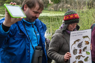 """Mit Schautafeln und Amphibienstimmen aus einem Tablett wurden verschiedene Lurche vorgestellt, die zum Teil im Gebiet aber auch """"live"""" zu hören und zu sehen waren. Fotos: Ludo Van den Bogaert"""