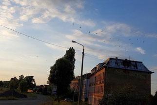 Mauersegler in der Landsberger Straße.