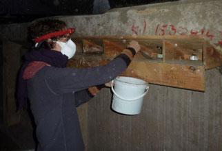 Reinigung eines Mauerseglerkastens. Fotos: Karsten Peterlein