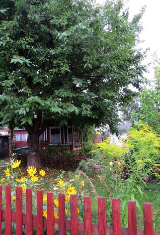 Halbstamm-Obstbäume sind auch im Kleingarten erlaubt und aus Naturschutzsicht erwünscht. Foto: Karsten Peterlein