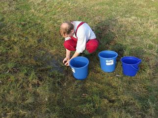 Vettrocknender Moorfroschlaich. Fotos: Karsten Peterlein