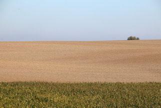 Industriell bewirtschaftete Landwirtschaftsflächen sind Wüsten in der Agrarlandschaft. Nahrung finden die meisten Tiere hier nicht mehr, zudem leiden sie unter Gifteinsatz und Düngung.