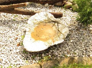 Für den Nestbau hat Familie Wild den Schwalben eine Lehmpfütze angelegt.