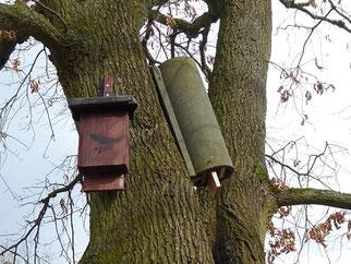 Verschiedene Kunsthöhlen an einem für Fledermäuse attraktiven Baum am Ufer einer Lache. Foto: Karsten Peterlein