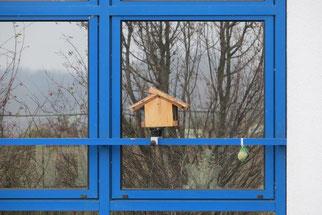 Futterhäuschen direkt vor einem spiegelden Fenster sind lebensgefährlich für die Tiere, es kann zu tödlichen Kollisionen mit der Glasscheibe kommen. Foto: NABU Leipzig
