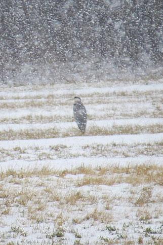 Wintervogel im Schnee.