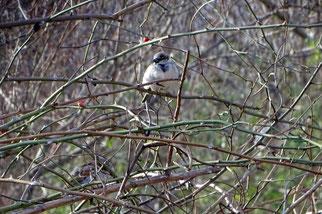 Gesetzlich geschützte Vogelarten verlieren durch die Strauchbeseitigung Versteck- und Nistplätze. Fotos: NABU Leipzig
