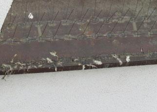Abdrücke von Vogelkrallen und Federreste in der klebrigen Paste, die überall verteilt wurde.
