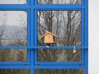 Das ungünstig platzierte Futterhäuschen wird durch die Spiegelungen der Fensterscheibe zur Todesfalle.