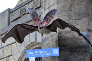 Spannende Informationen zum Fledermausschutz. Foto: Beatrice Jeschke