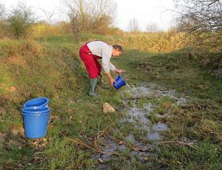 Mehrere Tage lang haben Helfer des NABU Leipzig die Lachen in Leipzig-Heiterblick befeuchtet, um den Moorfroschlaich zu retten.