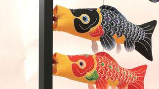 室内飾り鯉のぼり「福寿」 南天飾り