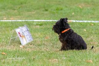 Doro kann schon Schilder lesen - beim Herbstturnier in Gerlingen