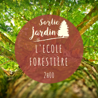 Jardin Botanique de Tours ; foret ; bois ; arbre ; visite jardin ; Tours ; Touraine