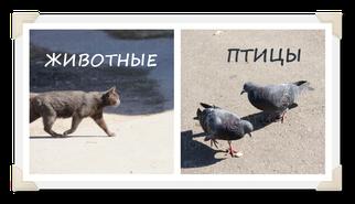 """Перейти к """"Животные и птицы"""""""