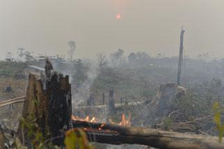 Aus einem Funken entsteht (nicht nur) im Sommer schnell ein großer Brand - Foto:  A. Wijaya