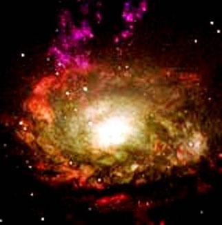 Stjernetåger