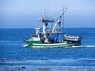 Fischkutter in Monterey