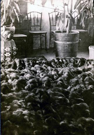 Партия соболя в квартире П.А. Кушнарева. Якутск. 1912 год. Из личного архива Анны Лавровой