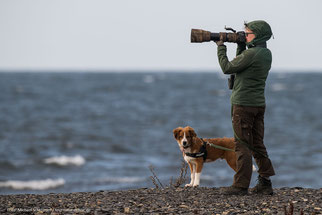 #Österreichischer Pinscher #Öpi #Adi von den Nuthewiesen #Welpe #Wohnmobil #Schweden #Auslandsreise #Hund