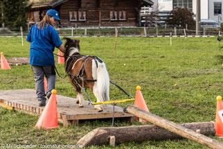 Pony-Holzrücken