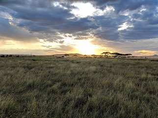 Serengeti Tansania Safari