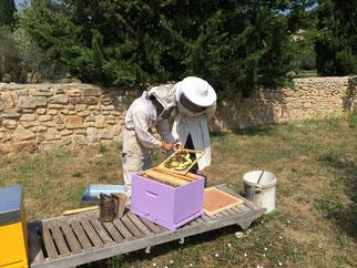 Les abeilles du Hameau des Baux