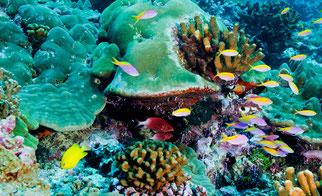 Corales. Foto: Greenpeace