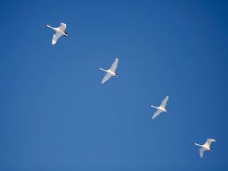 in der Ordnung des Familiensystems sein, symbolisiert durch fliegende Schwäne, systemische Familientherapie