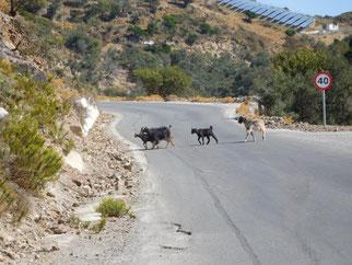Ausflug Mietwagen, Kreta