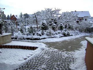 Stammrosen mit Winterschutz