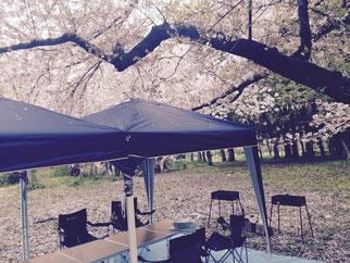大阪城を眼前に桜の木の下でバーベキュー