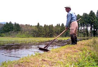 diese Reisbauern konnten gut lachen
