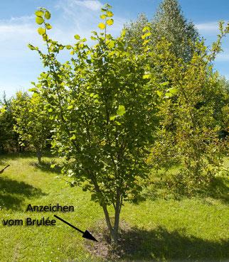 Was ist ein Trüffelbaum: Die Trüffelsuche - Gourmet-Zutat in freier Wildbahn