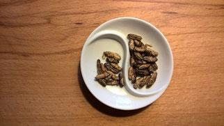 Insekten essen Teller